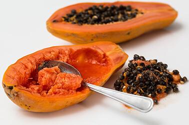 Cultivo de Papaya en Málaga